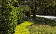 Palm Beach Estate 29